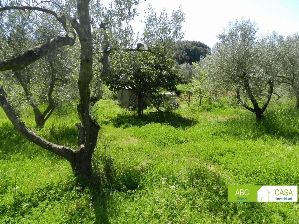 soggiorno-TERRENO AGRICOLO-in-vendita-Rosignano Marittimo-R1018